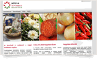 web-rozsaklaszter